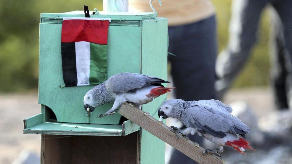 Uccelli addestrati per raccogliere rifiuti nei parchi: ecco come danno il buon esempio VIDEO