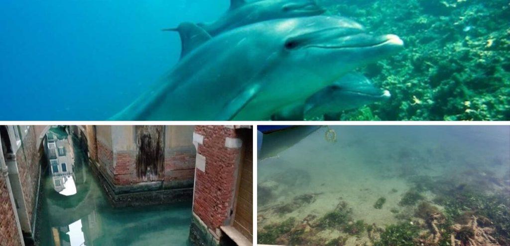 Coronavirus, in Puglia fondali puliti e i delfini si avvicinano alla costa