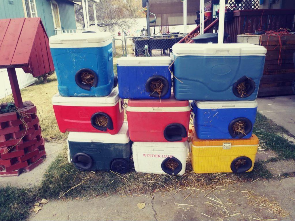 Animali, 150 cucce per gatti randagi create con borse termiche