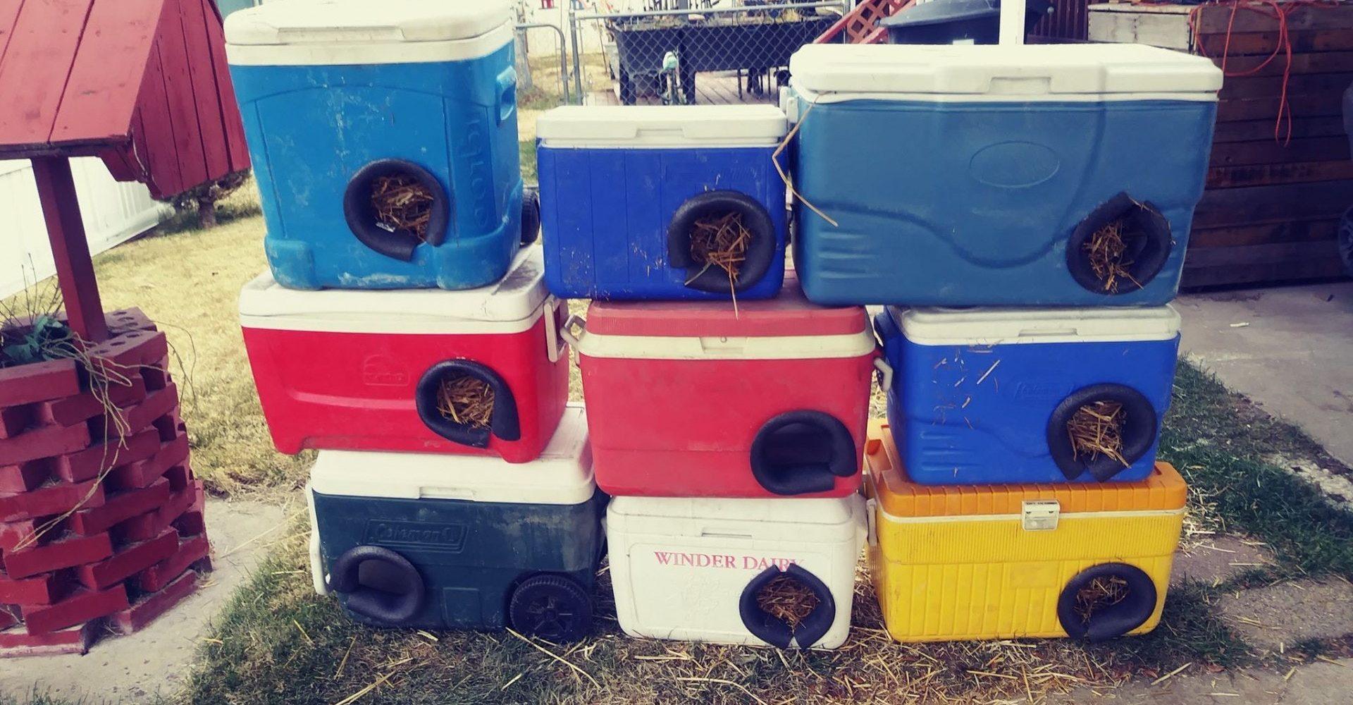 Costruire Cuccia Per Gatti animali, 150 cucce per gatti randagi create con borse termiche