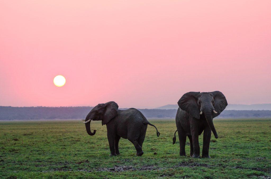 Coronavirus, in Thailandia 78 elefanti tornano liberi