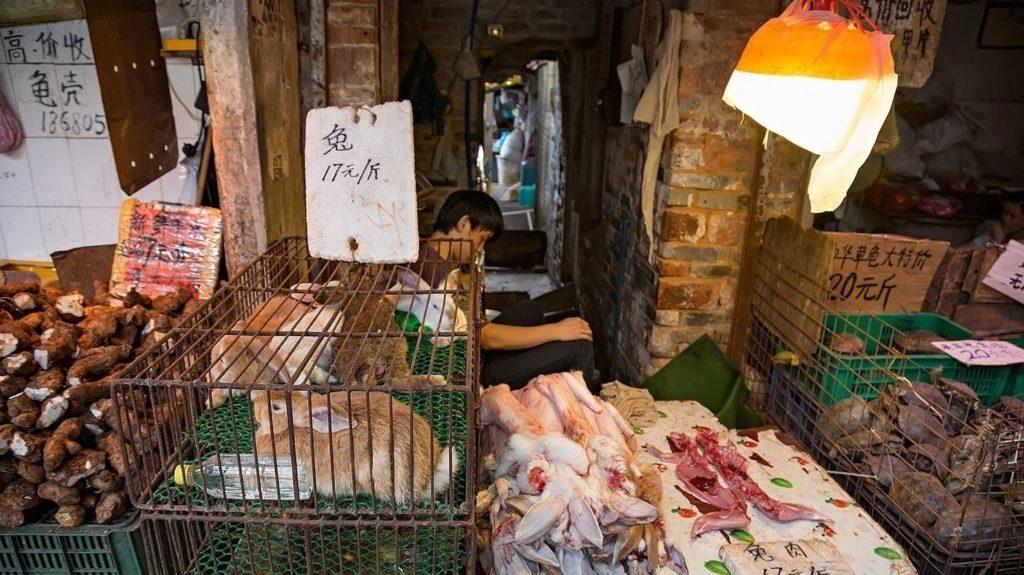 "Coronavirus, chiudere i ""wet market"" per evitare nuove pandemie"