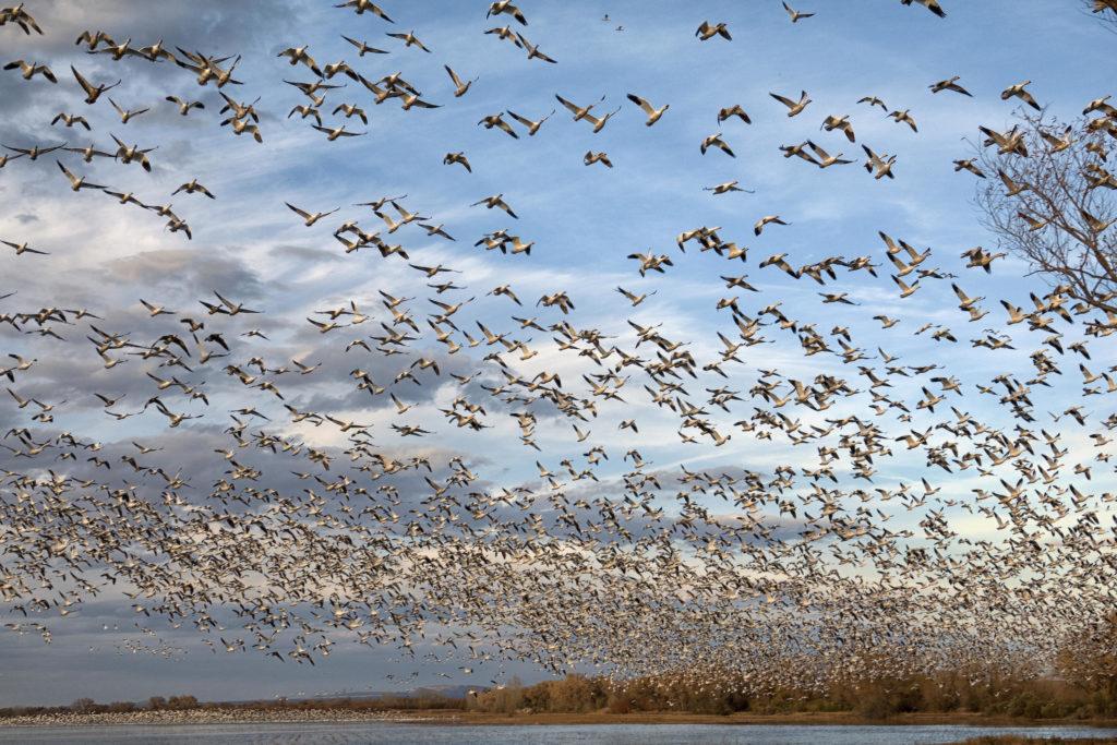 Animali, miliardi di uccelli a rischio a causa dell'amministrazione Trump