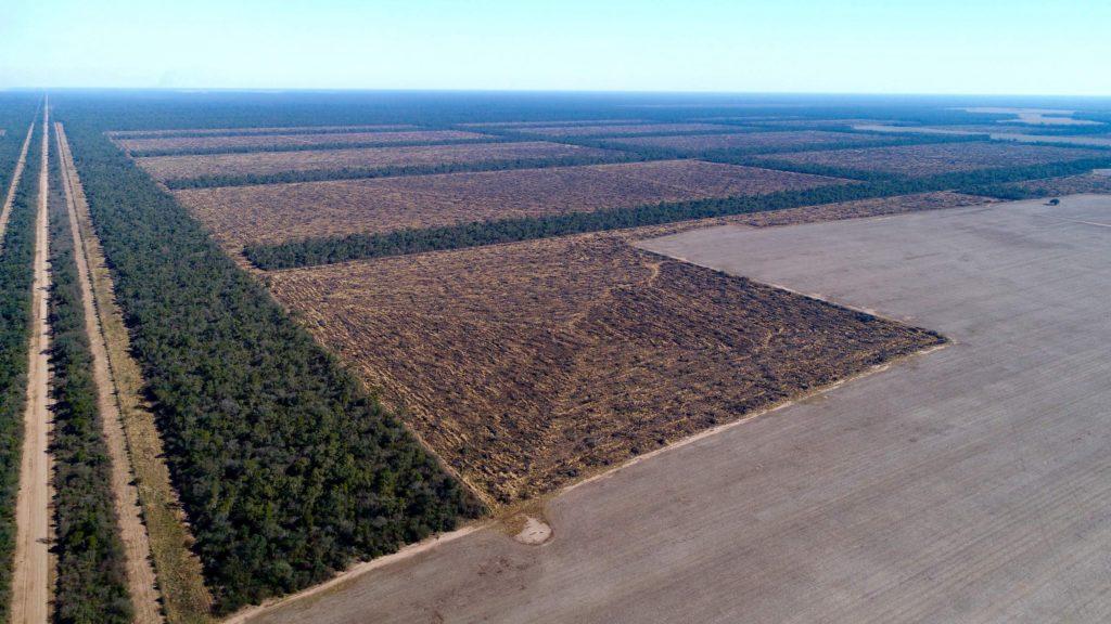 Commissione Europea, 3 miliardi di alberi entro il 2030 per combattere la crisi della biodiversità
