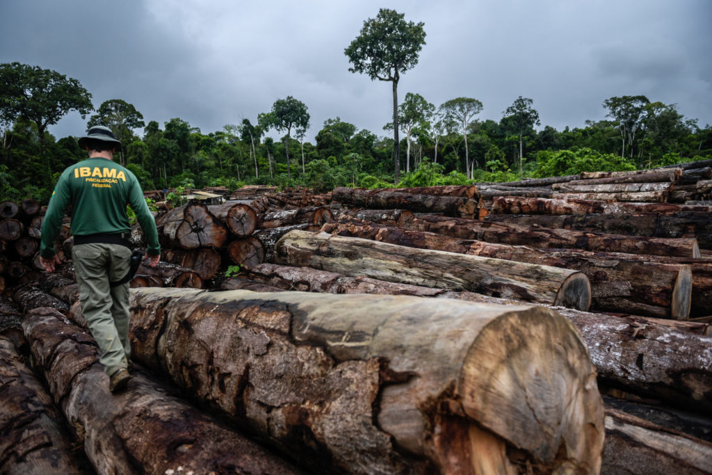Amazzonia, licenziati per aver protetto la foresta da taglialegna e minatori