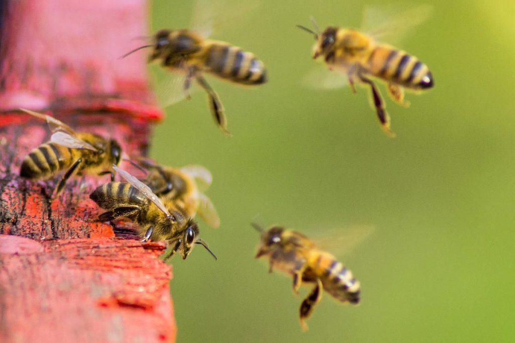 Pesticidi, la Commissione Europea vuole dimezzarne l'utilizzo per proteggere le api