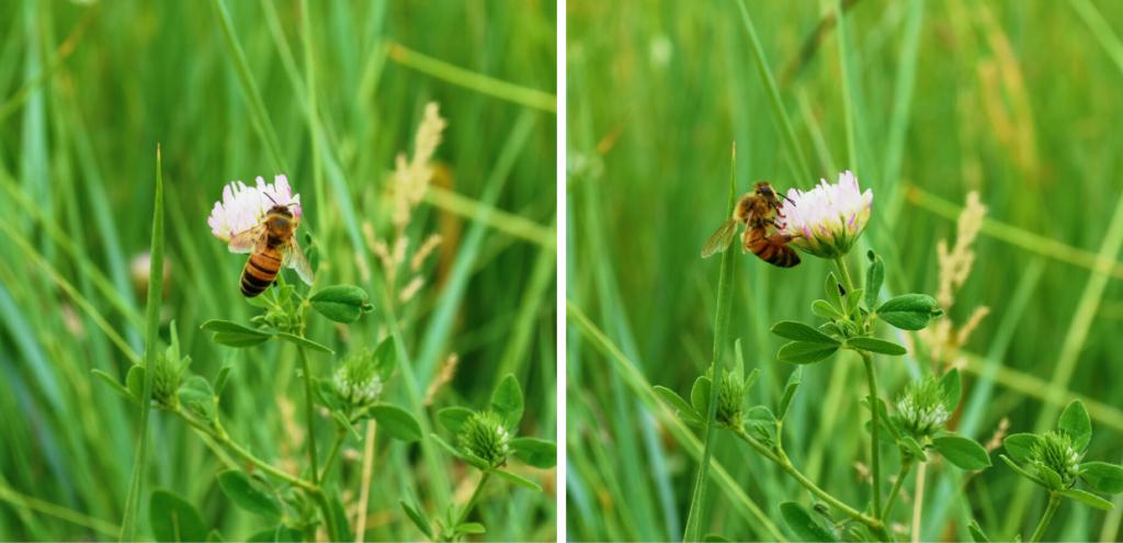 Giornata mondiale delle api, in Europa a rischio estinzione una specie su dieci