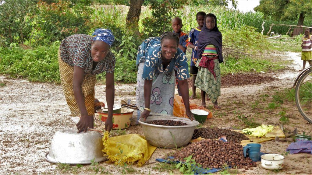 Africa, la biodiversità ha un ruolo fondamentale nella produzione di frutti di karitè