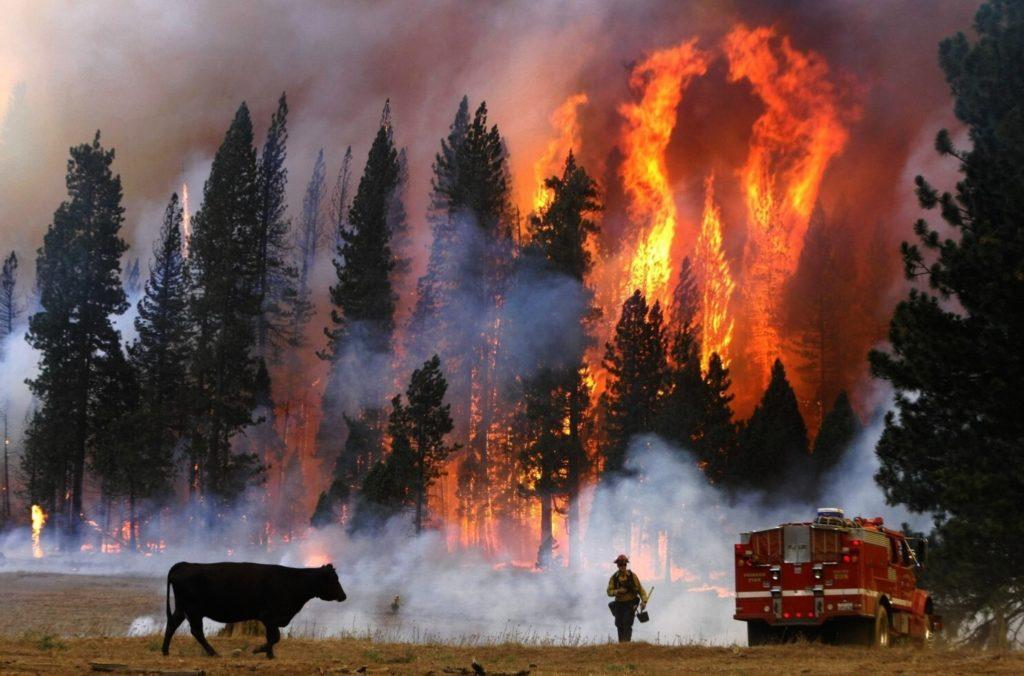 California, incendi in aumento: 60% in più rispetto allo scorso anno
