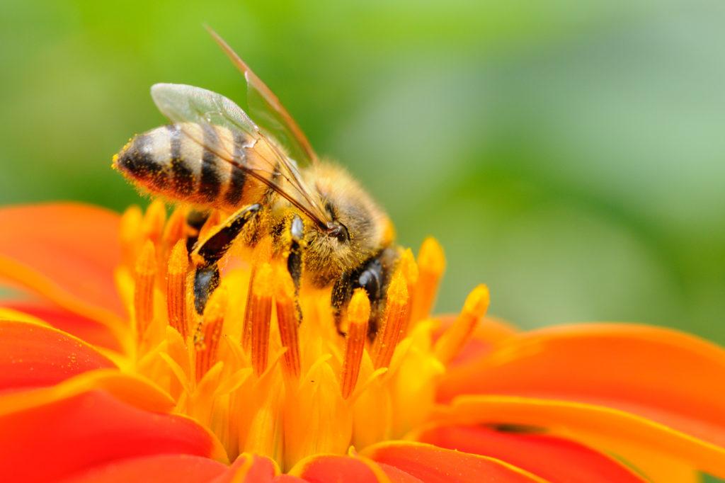La situazione dell'apicoltura nell'Italia post coronavirus, tra ripartenza e incendi dolosi