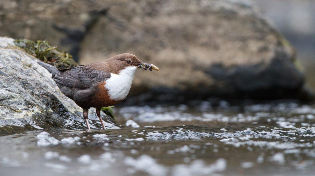 Animali, gli uccelli ingeriscono frammenti di microplastica ogni giorno