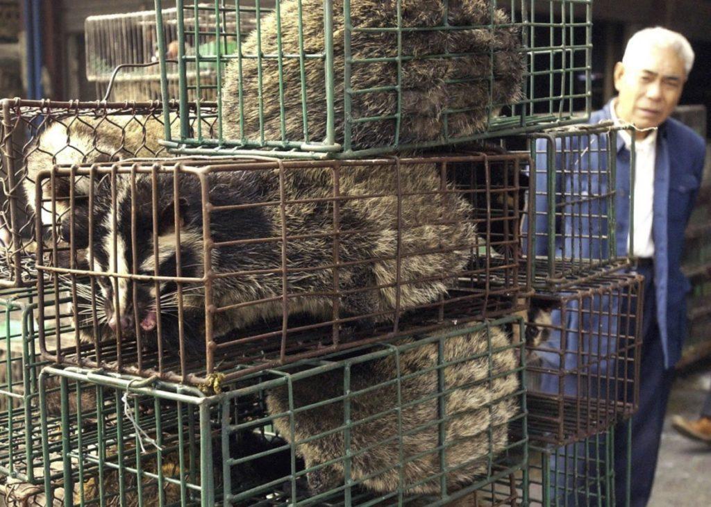 Wuhan, la città cinese vieta il consumo di animali selvatici dopo il COVID-19