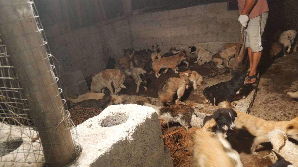 """Cina, """"i cani compagni non cibo"""". Arriva la notizia alla vigilia del Festival di Yulin"""