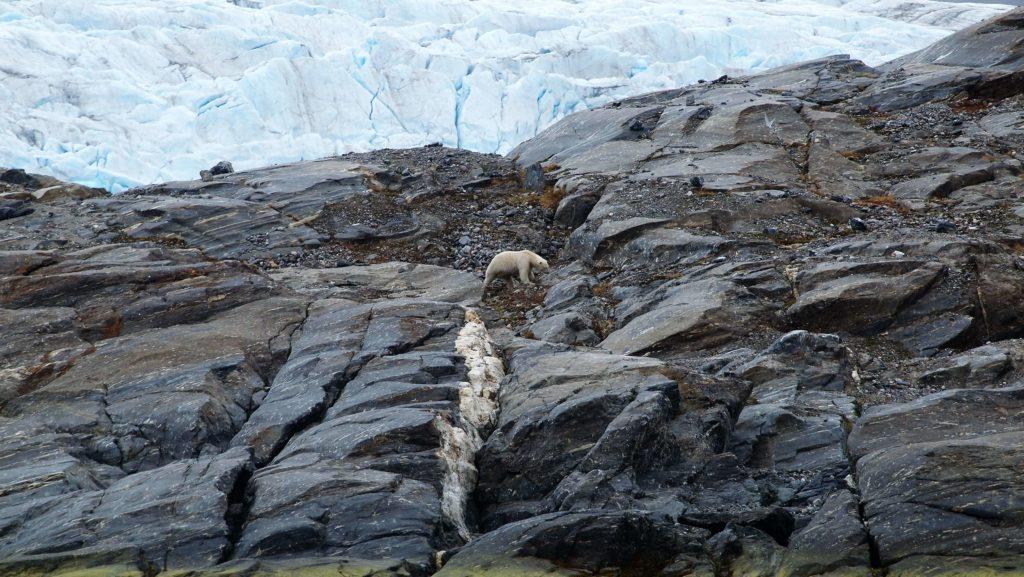 Clima, l'Arcipelago Artico raggiunge la temperatura più alta mai registrata