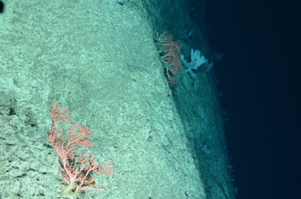 Bando Minambiente, 4,5 milioni di euro per progetti di adattamento nelle aree marine protette