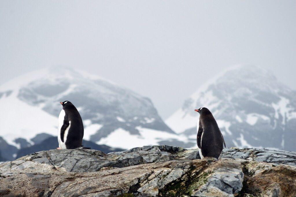 """Antartide, lo studio: """"La perdita di ghiaccio continuerà senza sosta per un lungo periodo"""""""