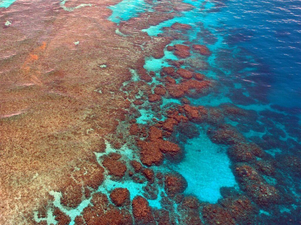 La Grande Barriera Corallina è in pericolo: ha perso la metà dei suoi coralli negli ultimi 30 anni