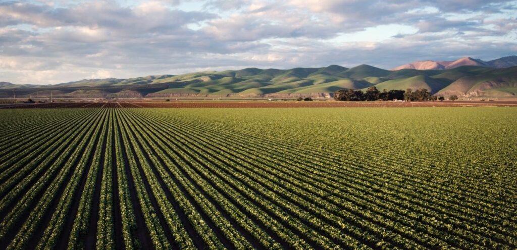 Dal MIPAAF 4milioni e 200 mila euro per la ricerca in agricoltura biologica
