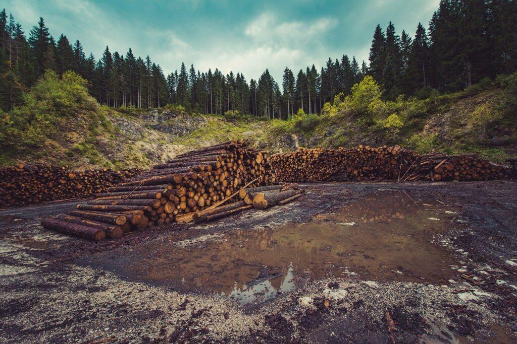 """Amazzonia a rischio! Gli esperti: """"Di questo passo nel 2064 sarà sparita"""""""