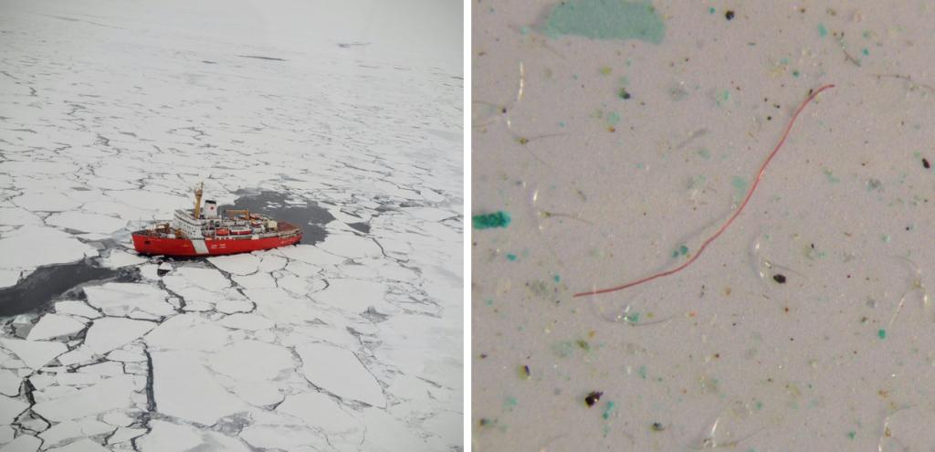 ll nostro bucato sta inquinando l'Artico! Le fibre sintetiche hanno raggiunto ogni angolo della Terra