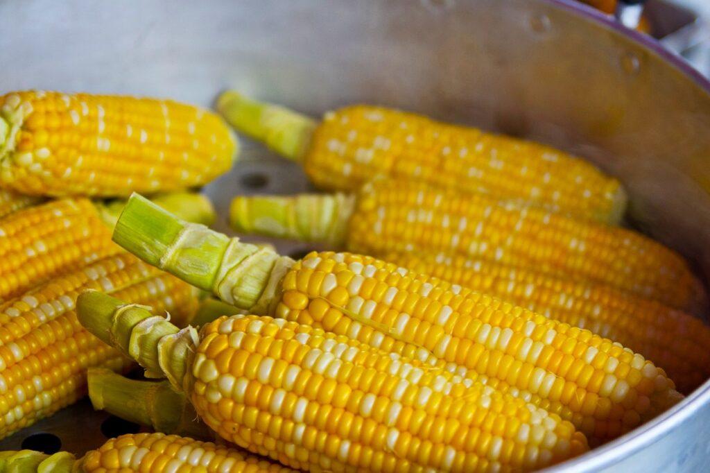 NO a OGM vecchi e nuovi! Il futuro dell'agricoltura è salvo? Ecco cosa accadrà