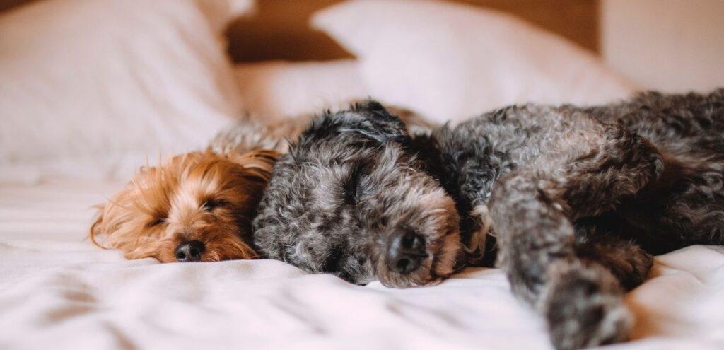Via libera alla cura di animali domestici anche con farmaci ad uso umano