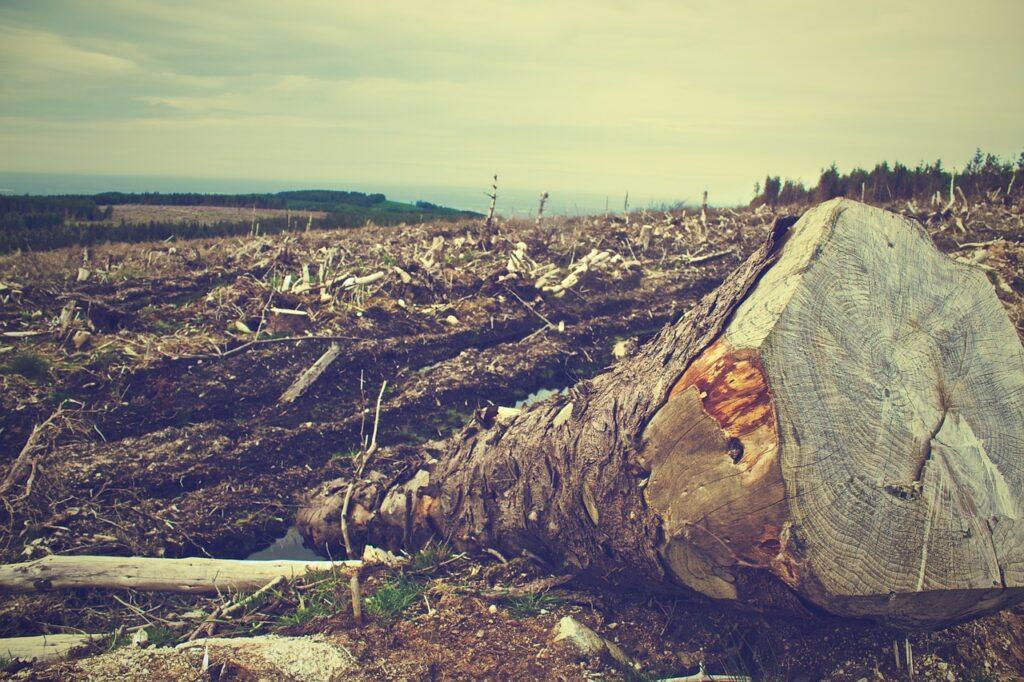 Amazzonia, Italia tra i primi importatori di prodotti derivati alla deforestazione