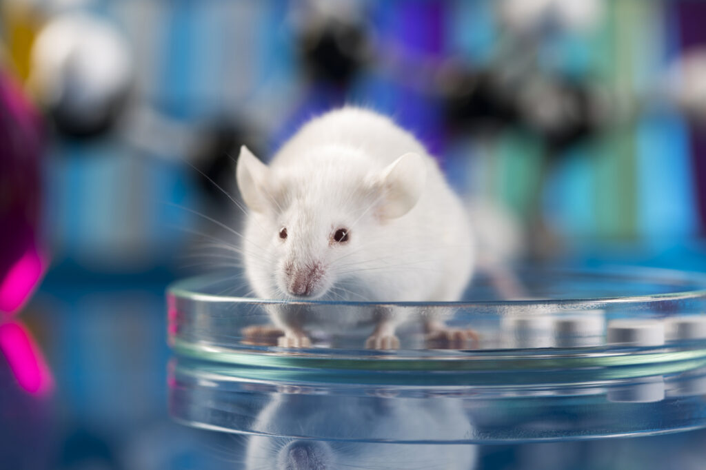 Madrid, sospesa l'attività del laboratorio dopo aver verificato i segni di abuso sugli animali