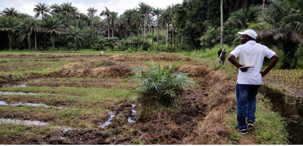Africa, la Sierra Leone ha venduto parte della foresta alla Cina per costruire un porto industriale