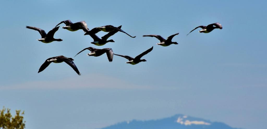 Animali, Biden vuole ripristinare le leggi sulla protezione degli uccelli cancellate da Trump