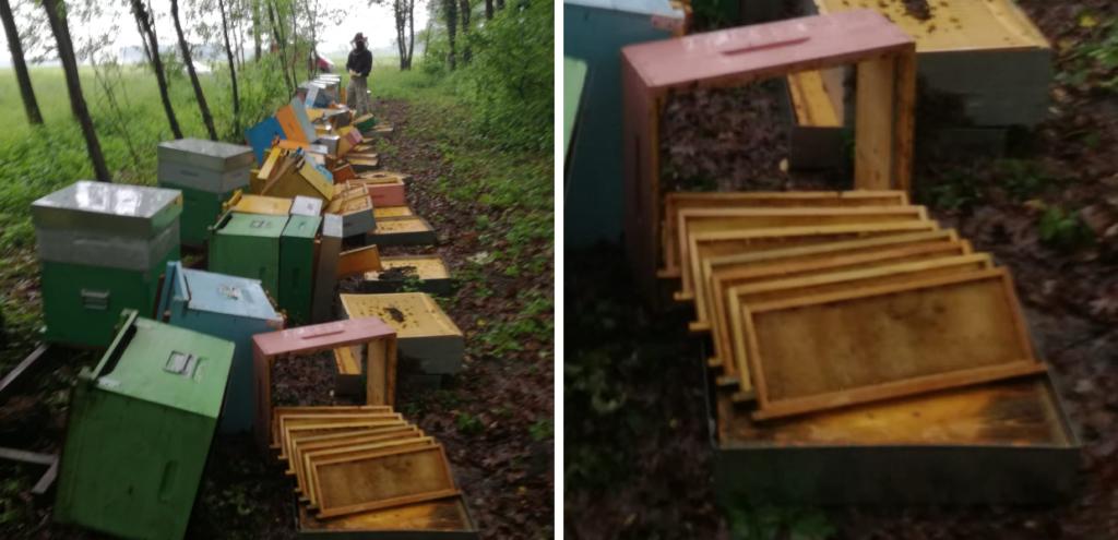 """Strage di api in Piemonte, distrutte 70 arnie. L'apicoltore colpito: """"Un gesto mirato"""""""
