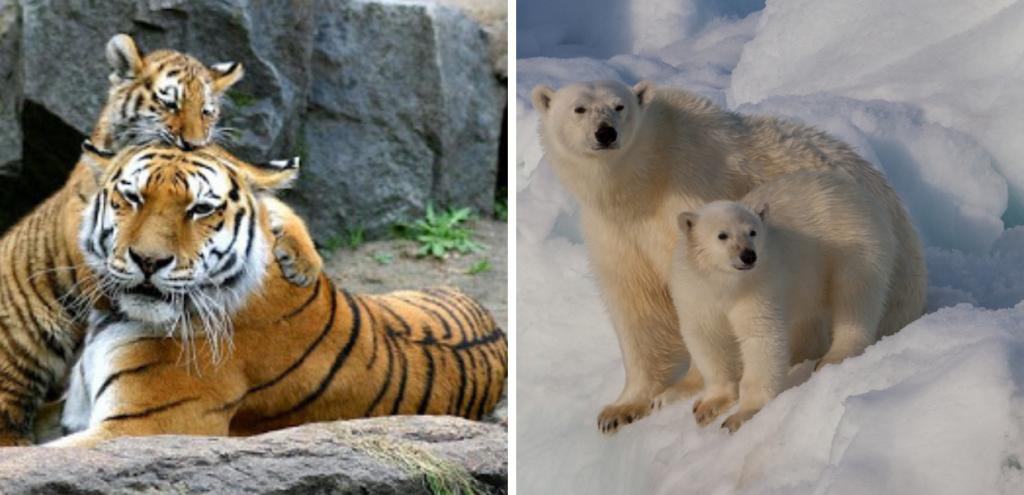 No alla caccia, sì alle foto: il progetto New Big 5 punta a tutelare gli animali a rischio estinzione