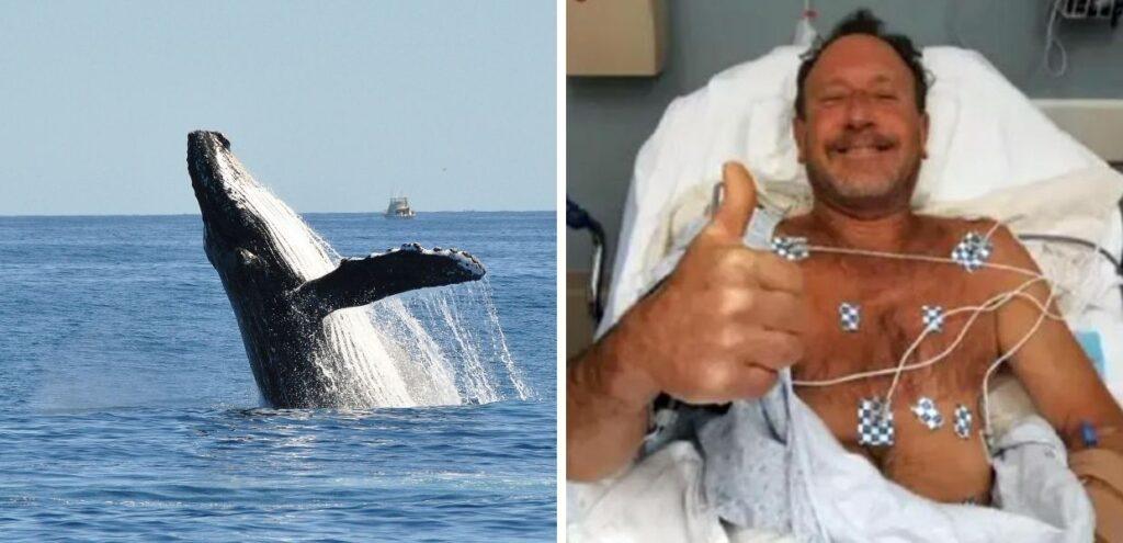 Balenottera azzurra inghiottisce un pescatore, salvo grazie ad un colpo di tosse