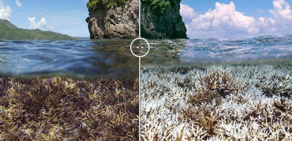 """L'Unesco: """"La Grande Barriera Corallina in Australia è in pericolo"""". Ma il governo continua a sottovalutare il problema"""