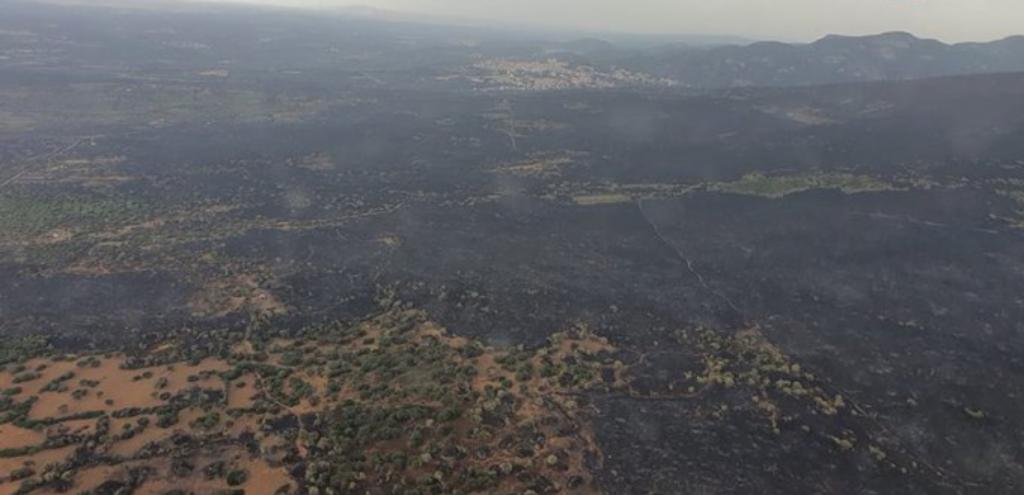 Incendi in Sardegna, gli allevatori che hanno sfidato le fiamme per salvare i loro animali