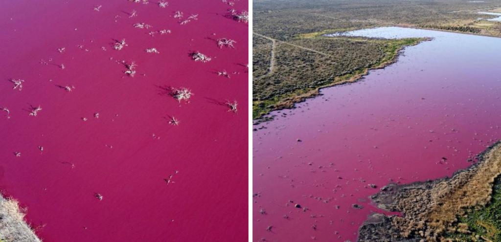 """Inquinamento, il mistero della """"Laguna Rosa"""" argentina"""