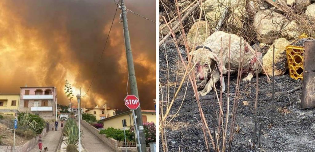 Brucia la Sardegna, dichiarato lo stato d'emergenza: 20mila ettari distrutti. Le immagini del disastro