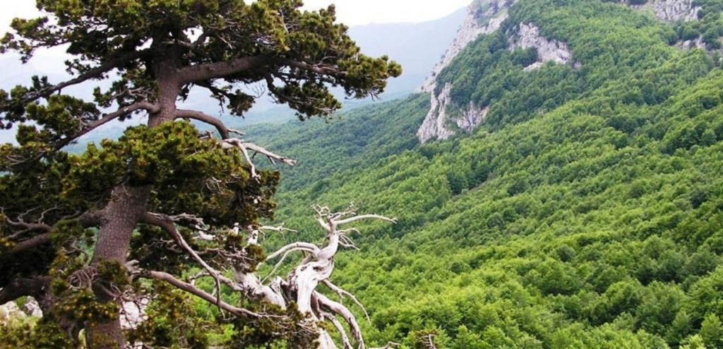 Unesco, 8000 ettari di foreste italiane riconosciuti Patrimonio mondiale dell'Umanità