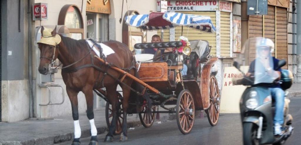 """Palermo, carrozzelle ferme dai 35°in su. Oipa: """"Il comune crede di tutelare così i cavalli?"""""""