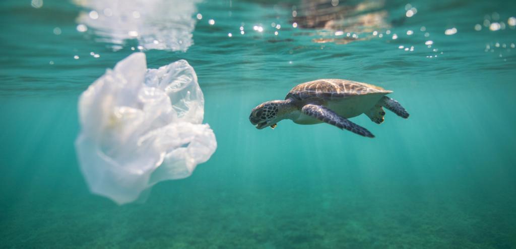 Plastica, strage di baby tartarughe in Australia