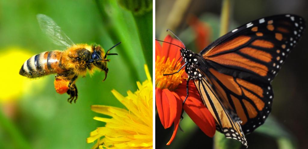 Non solo api, quasi tutti gli insetti del mondo stanno sparendo: una semplice idea per salvarli