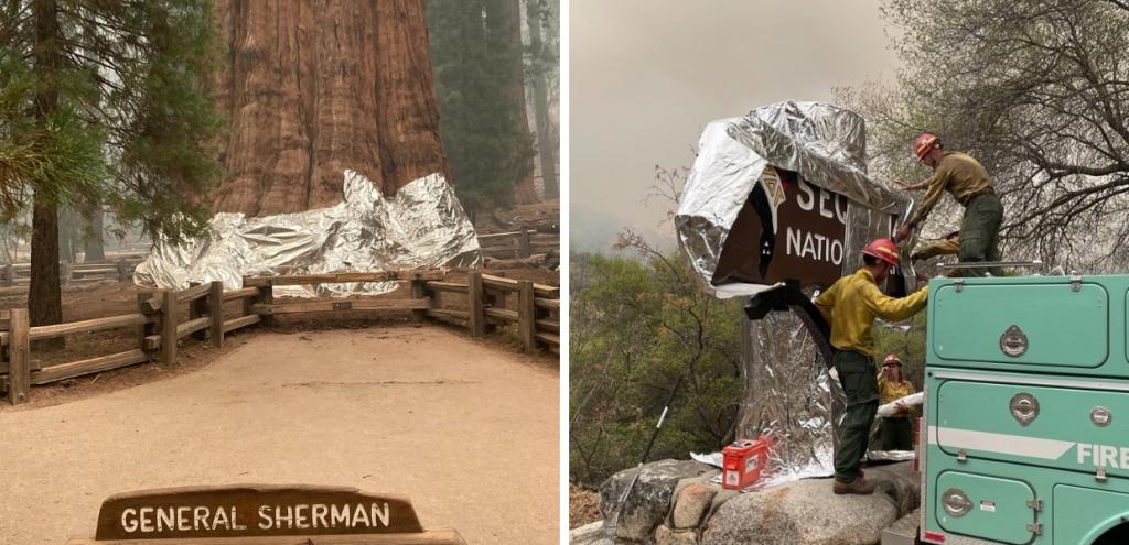 Incendi California, corsa contro il tempo per salvare l'albero più grande del mondo