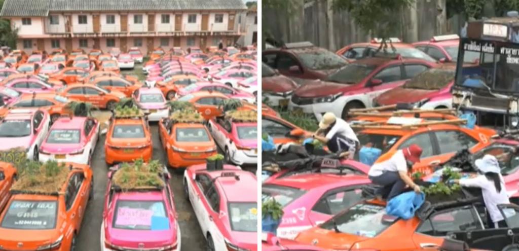 Thailandia, taxi fermi per la pandemia: cofani e tettini diventano orti
