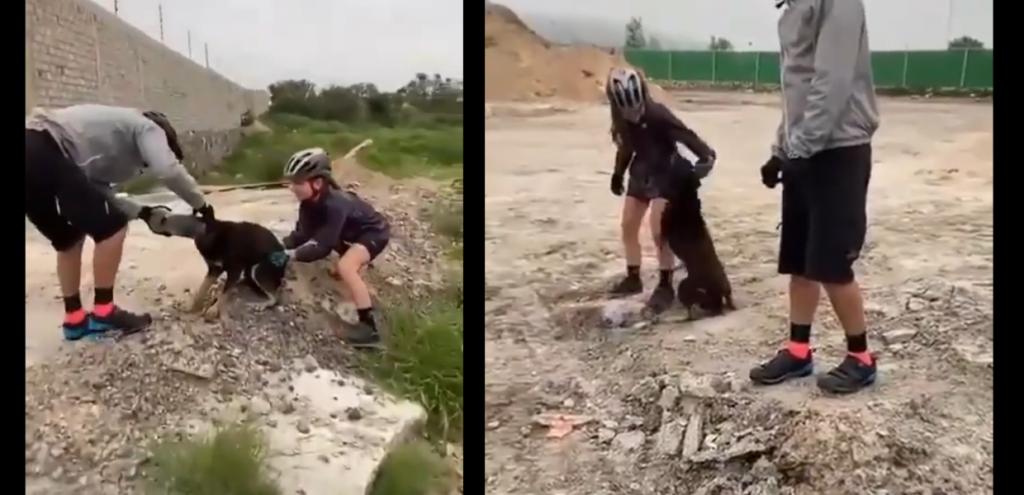 Plastica, ciclista salva un cane con la testa incastrata in una bottiglia: la gioia incontenibile dell'animale